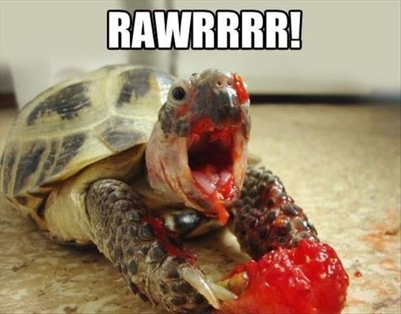 turtles meme - Tortoise - RAWRRRR!