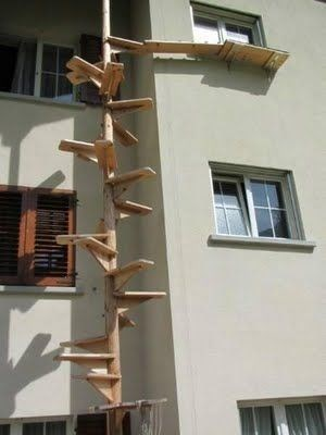cat stairs - Facade