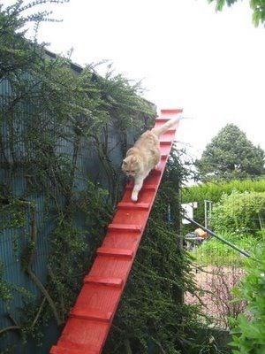 cat stairs - Tree