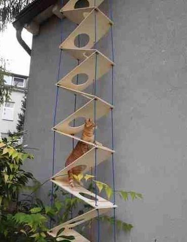 cat stairs - Architecture