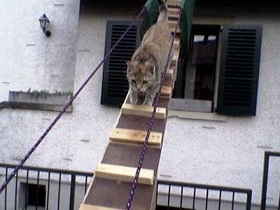 cat stairs - Felidae
