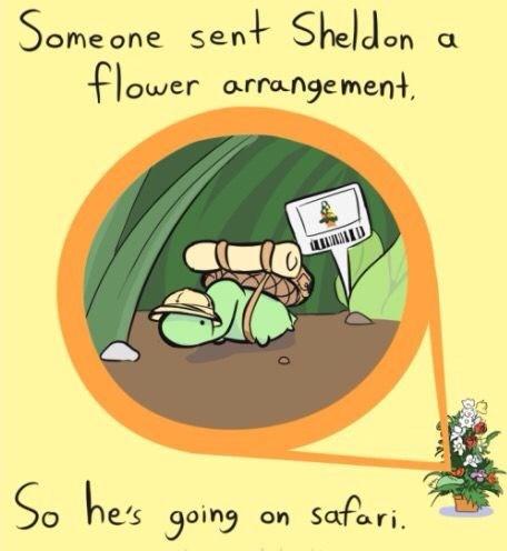Text - Some one sent Sheldon flower arrangement So he's going Safari. on