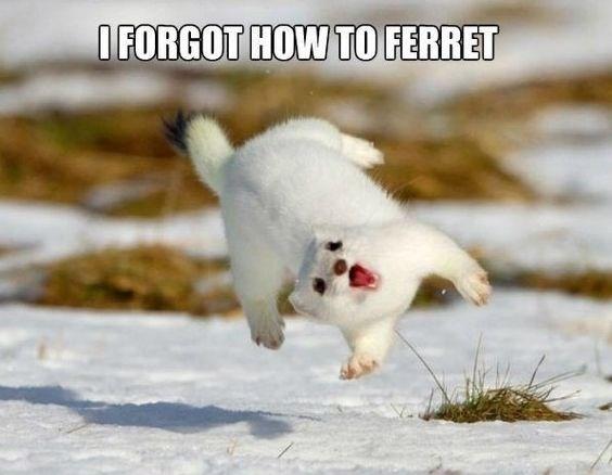 Photo caption - OFORGOT HOW TO FERRET