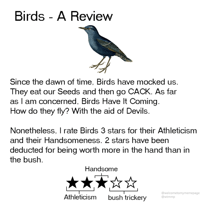 animal review - Text - Birds - A Review Since the dawn of time, Birds have mocked They eat our Seeds and then go CACK. As far as I am concerned, Birds Have It Coming How do they fly? With the aid of Devils. Nonetheless, I rate Birds 3 stars for their Athleticism and their Handsomeness. 2 stars have been deducted for being worth more in the hand than in the bush Handsome @welcometomymemepage @wtmmp Athleticism bush trickery