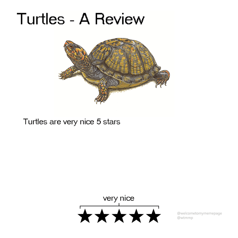 animal review - Turtle - Turtles - A Review Turtles are very nice 5 stars very nice @welcometomymemepage @wtmmp