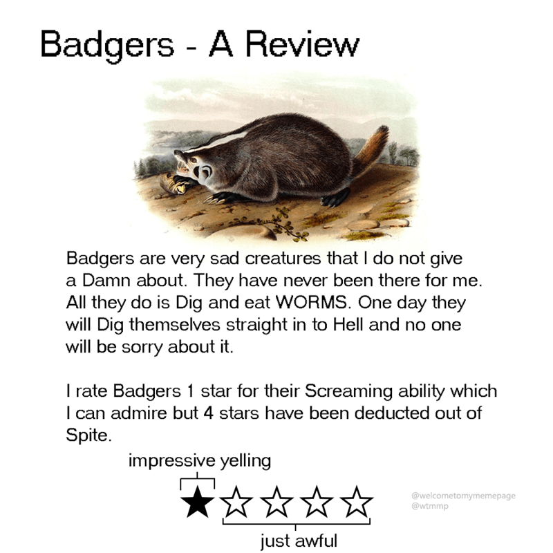 animal review - Turtle - Badgers - A Review Badgers are very sad creatures that I do not give a Damn about. They have never been there for me. All they do is Dig and eat WORMS. One day they will Dig themselves straight in to Hell and no one will be sorry about it. rate Badgers 1 star for their Screaming ability which I can admire but 4 stars have been deducted out of Spite impressive yelling @welcometomymemepage @wtmmp just awful