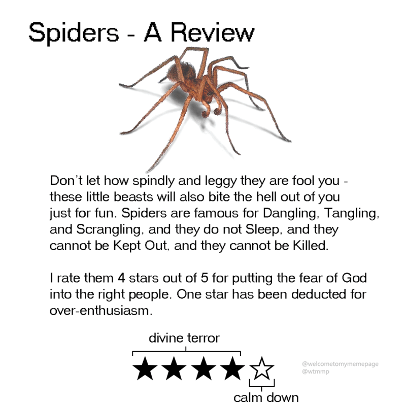 animal review - Text - Spiders - A Review Don't let how spindly and leggy they are fool you - these little beasts will also bite the hell out of you just for fun. Spiders are famous for Dangling. Tangling. and Scrangling, and they do not Sleep, and they cannot be Kept Out, and they cannot be Killed. I rate them 4 stars out of 5 for putting the fear of God into the right people. One star has been deducted for over-enthusiasm divine terror @welcometomymemepage @wtmmp calm down