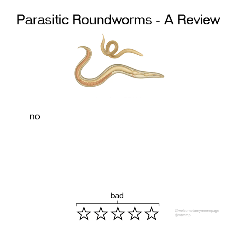 animal review - Text - Parasitic Roundworms - A Review no bad @welcometomymemepage @wtmmp