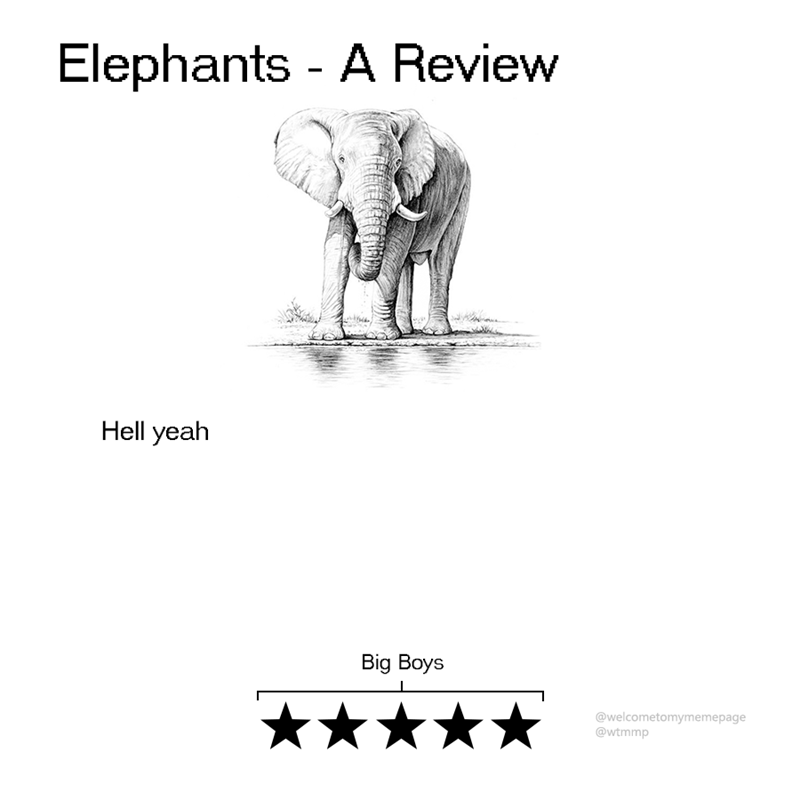 animal review - Text - Elephants - A Review Hell yeah Big Boys @welcometomymemepage @wtmmp