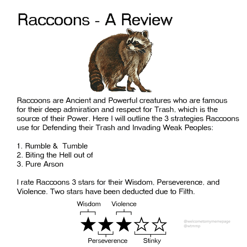animal review - Text - Raccoons - A Review Raccoons are Ancient and Powerful creatures who are famous for their deep admiration and respect for Trash, which is the source of their Power. Here I will outline the 3 strategies Raccoons use for Defending their Trash and Invading Weak Peoples: 1. Rumble & Tumble 2. Biting the Hell out of 3. Pure Arson