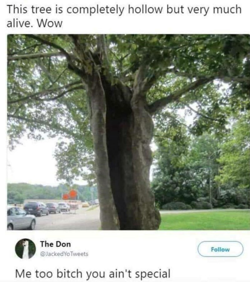 meme - Tree - This tree is completely hollow but very much alive. Wow The Don Follow @JackedYoTweets Me too bitch you ain't special