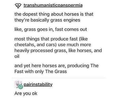 Text - transhumanisticpanspermia the dopest thing about horses is that they're basically grass engines like, grass goes in, fast comes out most things that produce fast (like cheetahs, and cars) use much more heavily processed grass, like horses, and oil and yet here horses are, producing The Fast with only The Grass pairinstability Are you ok