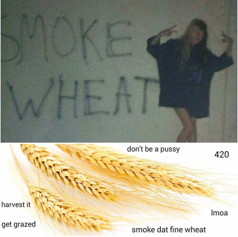 Text - SMOKE WHEAT don't be a pussy 420 harvest it Imoa get grazed smoke dat fine wheat