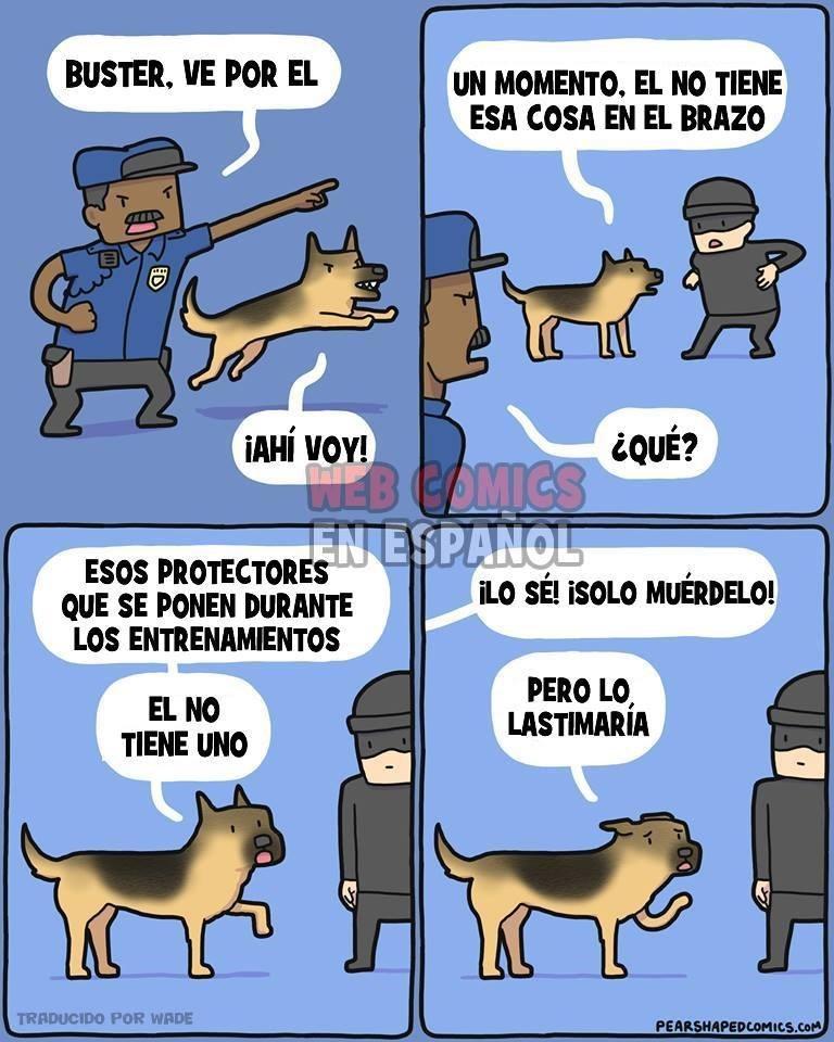 perro policia no ataca a ladron por no llevar proteccion