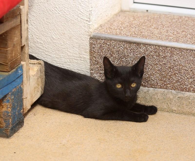 Cute Black Kitten Cats N Kittens Cat Pictures Cute Kittens