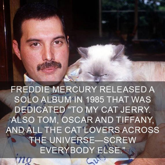 "cat fact - Cat - FREDDIE MERCURY RELEASED A SOLO ALBUM IN 1985 THAT WAS DEDICATED ""TO MY CAT JERRY. ALSO TOM, OSCAR AND TIFFANY AND ALL THE CAT LOVERS ACROSS THE UNIVERSE-SCREW EVERYBODY ELSE"""