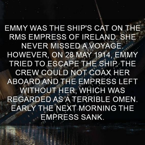 cat fact - Text - EMMY WAS THE SHIP'S CAT ON THE RMS EMPRESS OF IRELAND SHE NEVER MISSED A VOYAGE. HOWEVER, ON 28 MAY 1914, EMMY TRIED TO ESCAPE THE SHIP THE CREW COULD NOT COAX HER ABOARD AND THE EMPRESS LEFT WITHOUT HER; WHICH WAS REGARDED AS'A TERRIBLE OMEN. EARLY THE NEXT MORNING THE EMPRESS SANK.