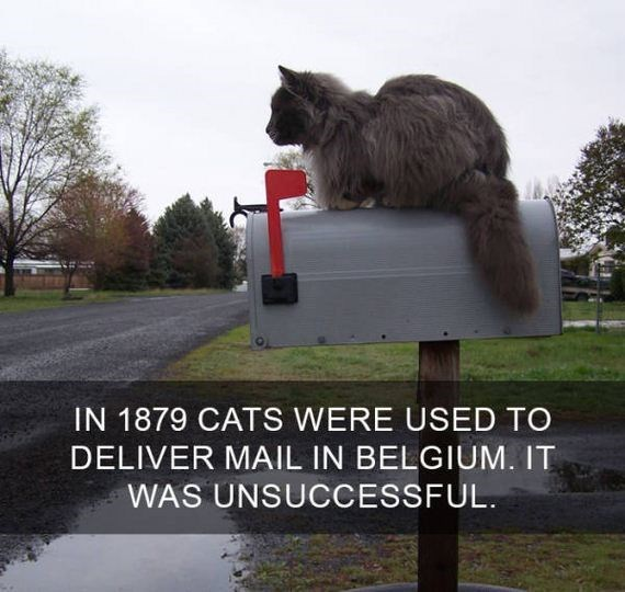 cat fact - Photo caption - IN 1879 CATS WERE USED TO DELIVER MAIL IN BELGIUM. IT WAS UNSUCCESSFUL