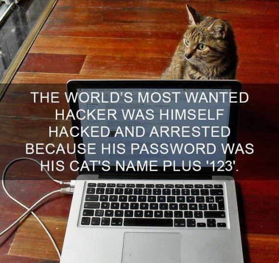 cat fact - Cat - THE WORLD'S MOST WANTED HACKER WAS HIMSELF HACKED AND ARRESTED BECAUSE HIS PASSWORD WAS HIS CAT'S NAME PLUS 123'