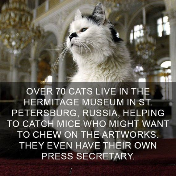 cat fact - Cat - OVER 70 CATS LIVE IN THE HERMITAGE MUSEUM IN ST PETERSBURG, RUSSIA, HELPING TO CATCH MICE WHO MIGHT WANT TO CHEW ON THE ARTWORKS THEY EVEN HAVE THEIR OWN PRESS SECRETARY