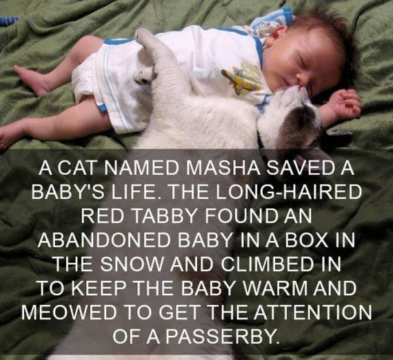cat fact - Photo caption - A CAT NAMED MASHA SAVED A BABY'S LIFE. THE LONG-HAIRED RED TABBY FOUND AN ABANDONED BABY IN A BOX IN THE SNOW AND CLIMBED IN TO KEEP THE BABY WARM AND MEOWED TO GET THE ATTENTION OF A PASSERBY