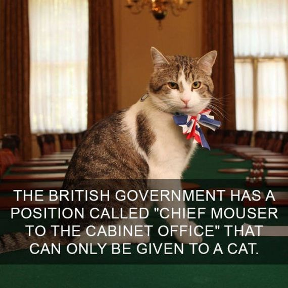 "cat fact - Cat - THE BRITISH GOVERNMENT HAS A POSITION CALLED ""CHIEF MOUSER TO THE CABINET OFFICE"" THAT CAN ONLY BE GIVEN TO A CAT"