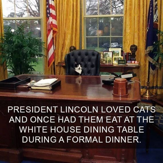 cat fact - Furniture - PRESIDENT LINCOLN LOVED CATS AND ONCE HAD THEM EAT AT THE WHITE HOUSE DINING TABLE DURING A FORMAL DINNER.