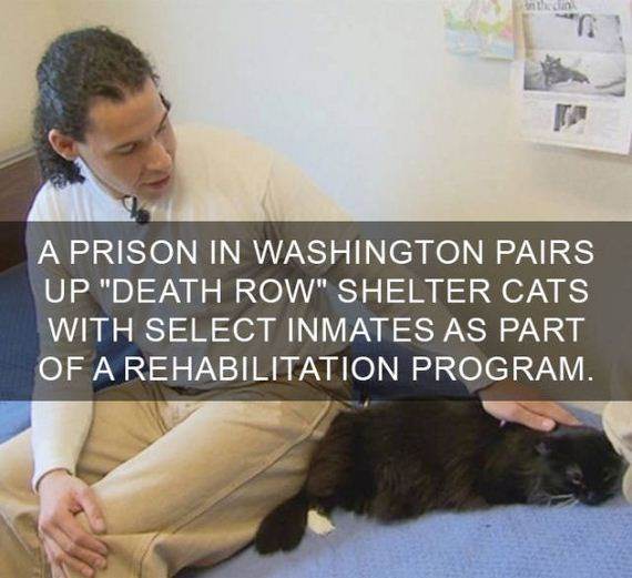 "cat fact - Text - n the din A PRISON IN WASHINGTON PAIRS UP ""DEATH ROW"" SHELTER CATS WITH SELECT INMATES AS PART OF A REHABILITATION PROGRAM"