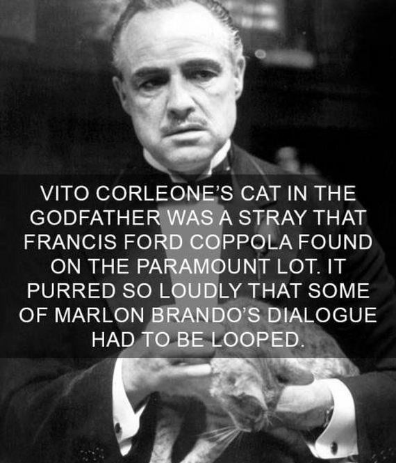 cat fact - Text - VITO CORLEONE'S CAT IN THE GODFATHER WAS A STRAY THAT FRANCIS FORD COPPOLA FOUND ON THE PARAMOUNT LOT. IT PURRED SO LOUDLY THAT SOME OF MARLON BRANDO'S DIALOGUE HAD TO BE LOOPED