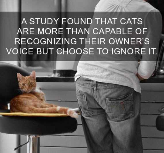 cat fact - Cat - A STUDY FOUND THAT CATS ARE MORE THAN CAPABLE OF RECOGNIZING THEIR OWNER'S VOICE BUT CHOOSE TO IGNORE IT.