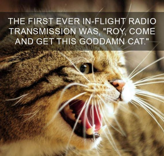 "cat fact - Cat - THE FIRST EVER IN-FLIGHT RADIO TRANSMISSION WAS, ""ROY, COME AND GET THIS GODDAMN CAT."""