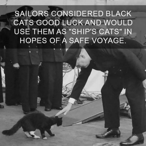 "cat fact - Dog - SAILORS CONSIDERED BLACK CATS GOOD LUCK AND WOULD USE THEM AS ""SHIP'S CATS"" IN HOPES OF A SAFE VOYAGE."