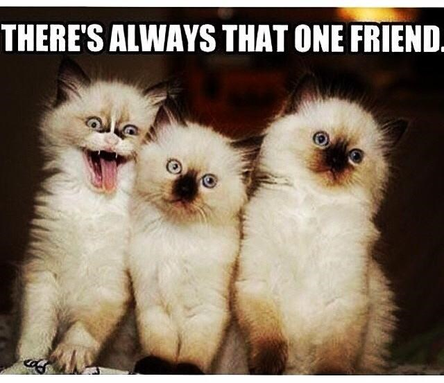 Cat - THERE'S ALWAYS THAT ONE FRIEND.