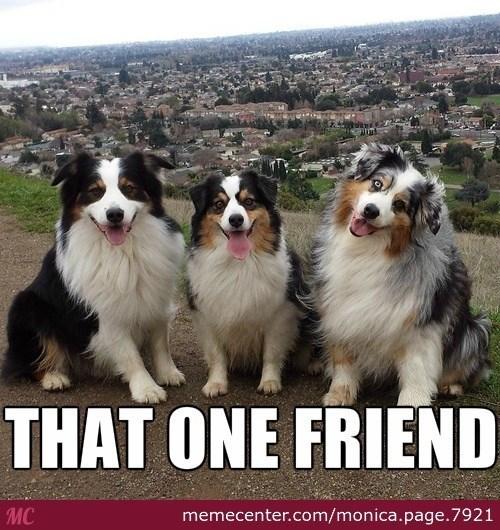Dog - THAT ONE FRIEND MC memecenter.com/monica.page.7921