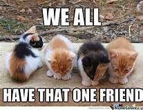 Cat - WE ALL HAVE THAT ONE FRIEND