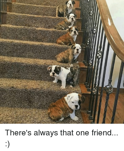 Bengal tiger - There's always that one friend... :)