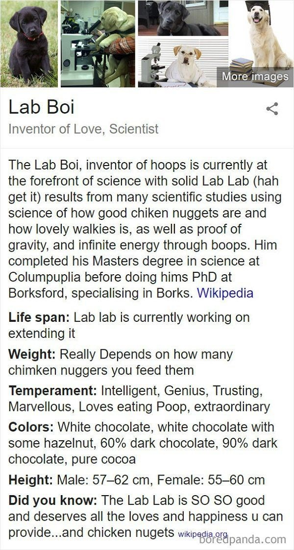Text - More images Lab Boi Inventor of Love, Scientist The Lab Boi, inventor of hoops is currently at the forefront of science with solid Lab Lab (hah get it) results from many scientific studies using science of how good chiken nuggets are and how lovely walkies is, as well as proof of gravity, and infinite energy through boops. Him completed his Masters degree in science at Columpuplia before doing hims PhD at Borksford, specialising in Borks. Wikipedia Life span: Lab lab is currently working