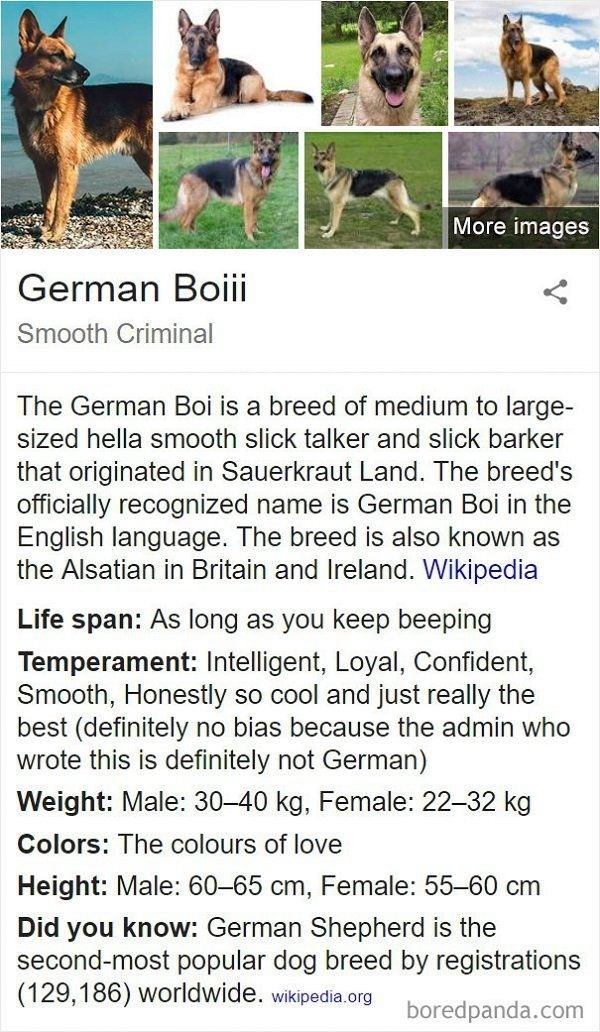 Text - More images German Boiii Smooth Criminal The German Boi is a breed of medium to large- sized hella smooth slick talker and slick barker that originated in Sauerkraut Land. The breed's officially recognized name is German Boi in the English language. The breed is also known as the Alsatian in Britain and Ireland. Wikipedia Life span: As long as you keep beeping Temperament: Intelligent, Loyal, Confident, Smooth, Honestly so cool and just really the best (definitely no bias because the admi