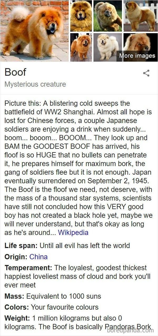 Text - More images Boof Mysterious creature Picture this: A blistering cold sweeps the battlefield of WW2 Shanghai. Almost all hope is lost for Chinese forces, a couple Japanese soldiers are enjoying a drink when suddenly... boom... booom... BOOOM... They look up and BAM the GOODEST BOOF has arrived, his floof is so HUGE that no bullets can penetrate it, he prepares himself for maximum bork, the gang of soldiers flee but it is not enough. Japan eventually surrendered on September 2, 1945 The Boo