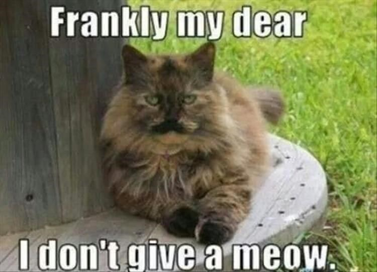 caturday - Cat - Frankly my dear I don't give a meow.