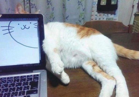 caturday - Cat