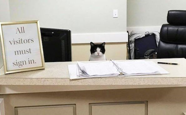caturday - Cat - All visitors must sign in.