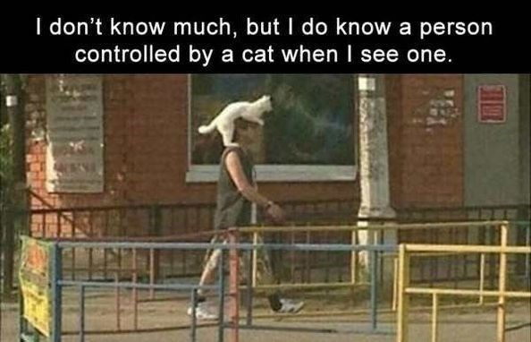 caturday - Human - I don't know much, but I do know a person controlled by a cat when I see one.