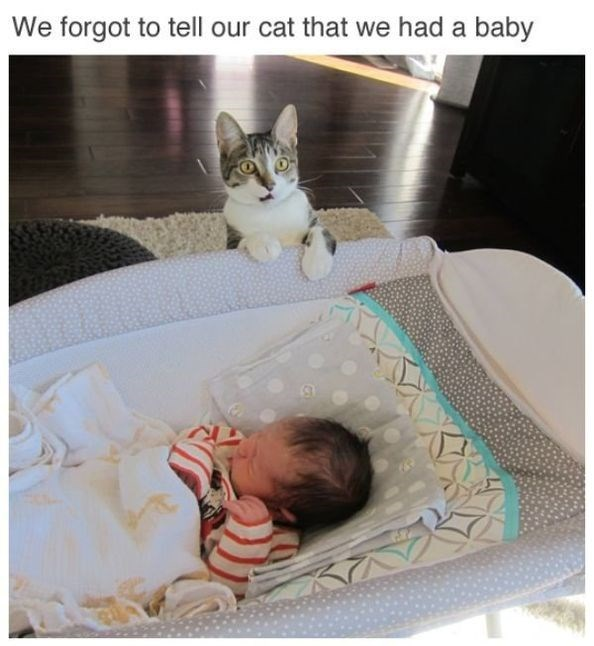 caturday - Cat - We forgot to tell our cat that we had a baby