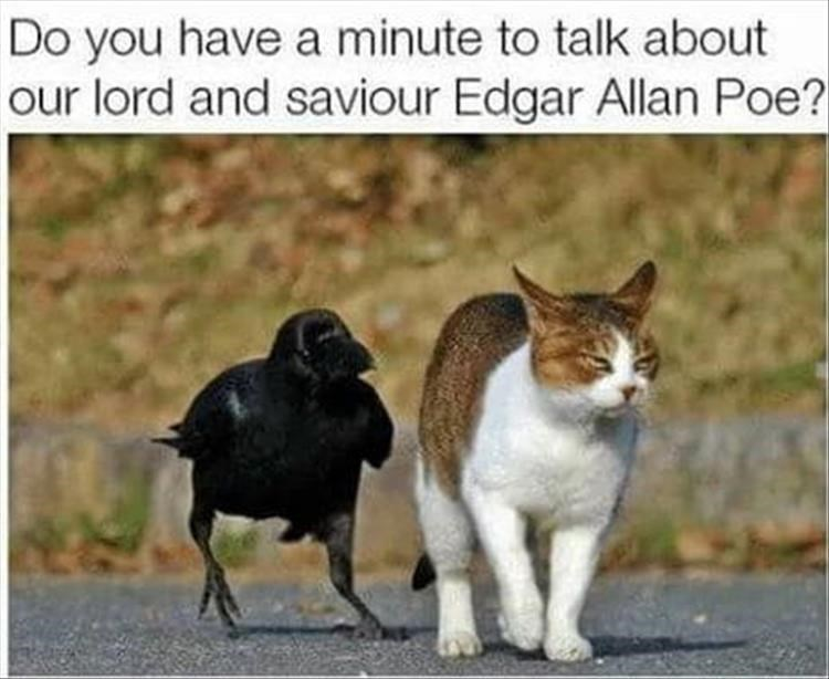 caturday - Cat - Do you have a minute to talk about our lord and saviour Edgar Allan Poe?