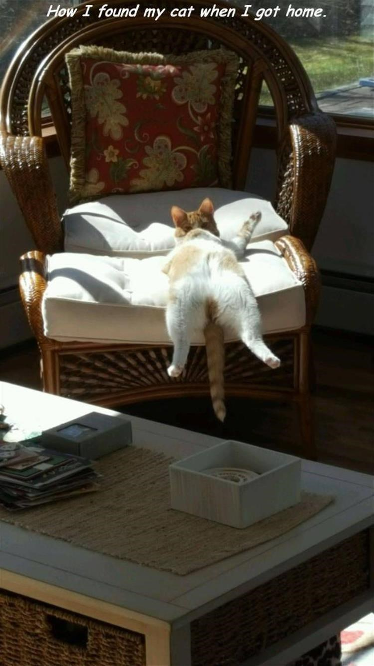 caturday - Furniture - How I found my cat when I got home.