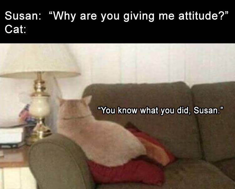 """caturday - Text - Susan: """"Why are you giving me attitude?"""" Cat: """"You know what you did, Susan."""""""