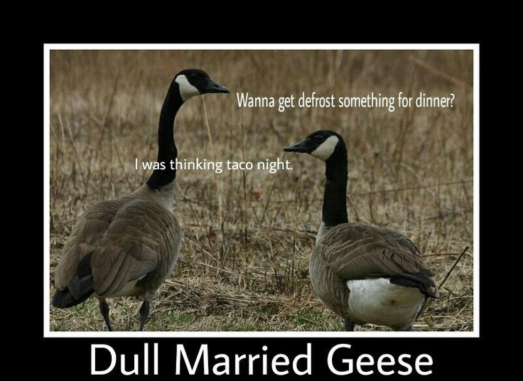 Bird - Wanna get defrost something for dinner? I was thinking taco night. Dull Married Geese