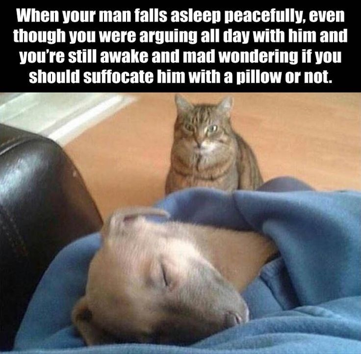Cat - When your man falls asleep peacefully, even though you were arguing all day with him and you're still awake and mad wondering if you should suffocate him with a pillow or not.