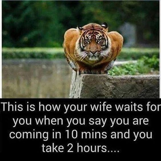 Bengal tiger - This is how your wife waits for you when you say you are coming in 10 mins and you take 2 hours....